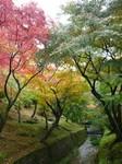 東福寺2.jpg